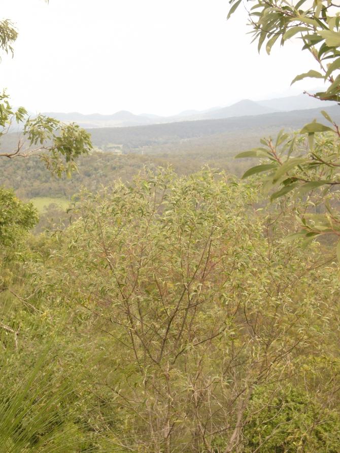 Buhse's Lookout April 2013 067