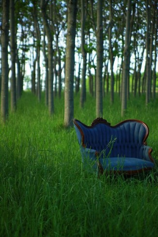 chair forest