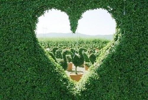 FD topiary