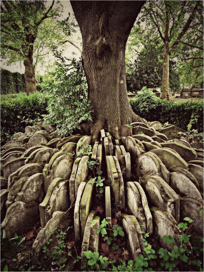 The Hardy Tree In the churchyard of St Pancras Old Church in London,
