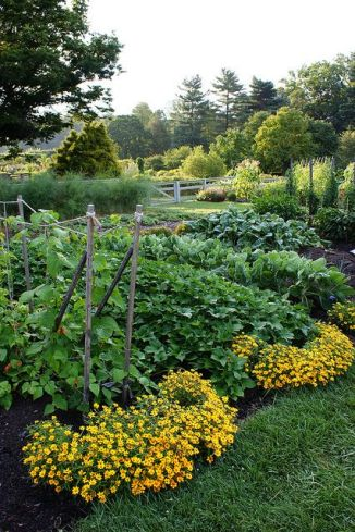 Just imagine our veg garden like this but with no plants and chicken wire, and in Australia, and oh just better all around.