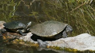 turtles 1