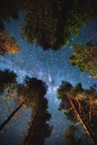 shooting star through the trees in Edsbyn, Sweden
