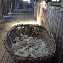 Wool clippings