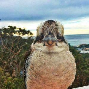 bird brain 1