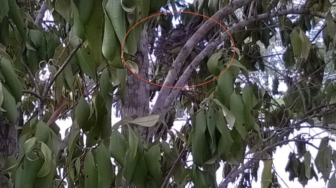 Birdie in the nest