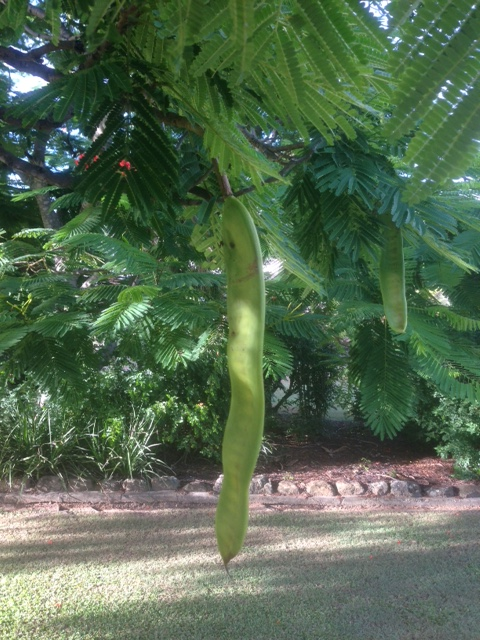 Delivered deep and abiding interest in neighbour's seed pod, half way back up the hill. Shade and time to breath!