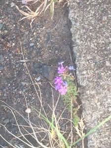 Obligatory photo of flower growing in harsh conditions as metaphor for life