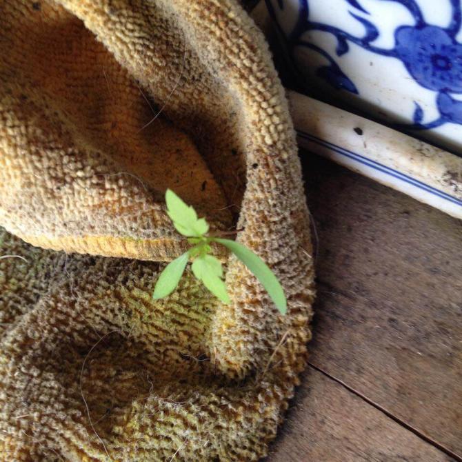 seedling .jpg